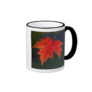 Red Maple Acer rubrum) red leaf in autumn, Coffee Mug