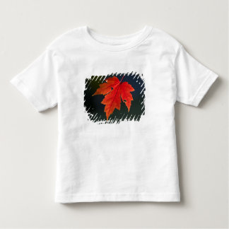 Red Maple Acer rubrum) red leaf in autumn, Toddler T-shirt