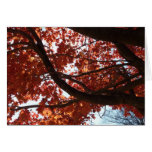 Red Maple Branches Autumn Colorful Card