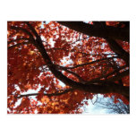 Red Maple Branches Autumn Colorful Postcard