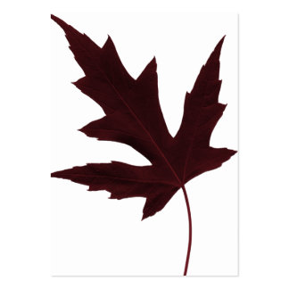 Red Maple Business Card