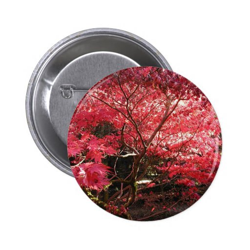 red maple button