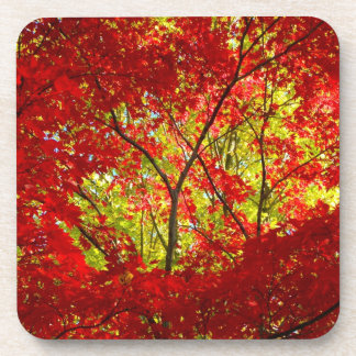 Red Maple Coasters