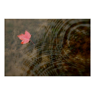 Red Maple Floating Posters