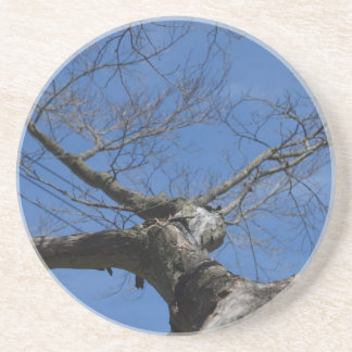 Red Maple, gone Drink Coaster