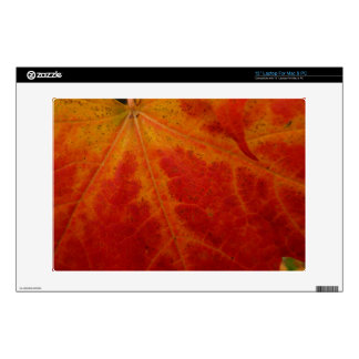 "Red Maple Leaf Abstract Autumn Nature Photography 13"" Laptop Skins"