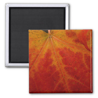 Red Maple Leaf Abstract Autumn Nature Photography 2 Inch Square Magnet