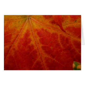 Red Maple Leaf Abstract Autumn Nature Photography Card