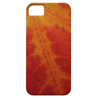 Red Maple Leaf Abstract Autumn Nature Photography iPhone SE/5/5s Case