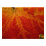 Red Maple Leaf Abstract Autumn Nature Photography Photo Print