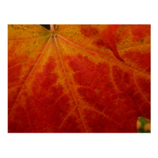 Red Maple Leaf Abstract Autumn Nature Photography Postcard