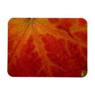 Red Maple Leaf Abstract Autumn Nature Photography Rectangular Photo Magnet