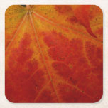 Red Maple Leaf Abstract Autumn Nature Photography Square Paper Coaster