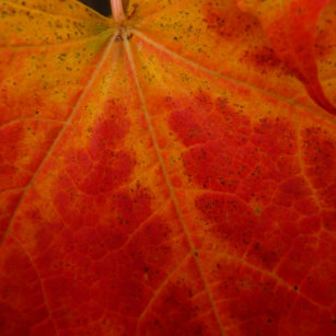 Red Maple Leaf Abstract Autumn Nature Photography Wham-O Frisbee 16807ff4e880