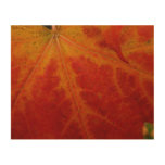 Red Maple Leaf Abstract Autumn Nature Photography Wood Wall Decor
