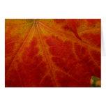 Red Maple Leaf Card