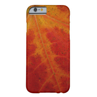 Red Maple Leaf Barely There iPhone 6 Case