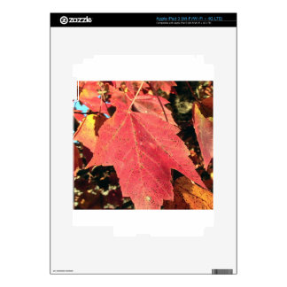 RED MAPLE LEAF IN AUTUMN iPad 3 DECAL