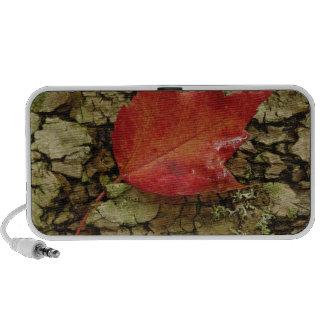 Red maple leaf on birch bark, White Mountain Mini Speakers