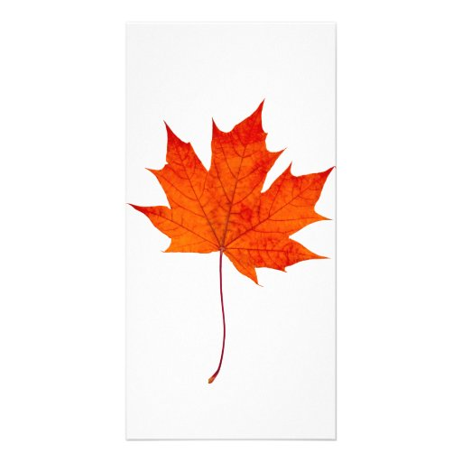 Red maple leaf photo card