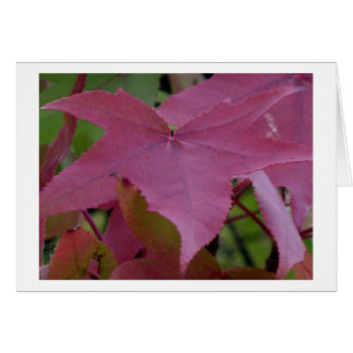 Red Maple Leaf - Photograph Card