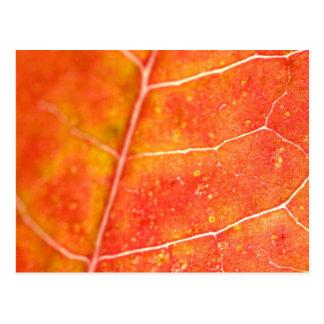 Red Maple Leaf Postcard