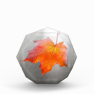 Red Maple Leaf - Velvet Autumn Award