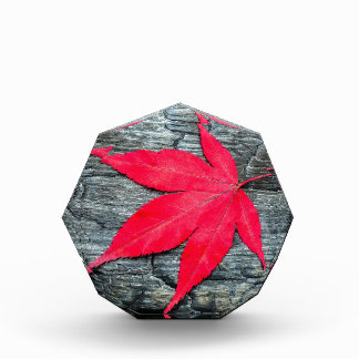 Red maple leave on black burnt wood acrylic award