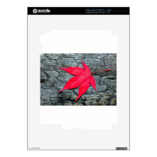 Red maple leave on black burnt wood decal for the iPad 2