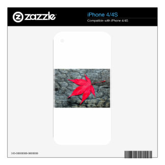Red maple leave on black burnt wood iPhone 4 skin