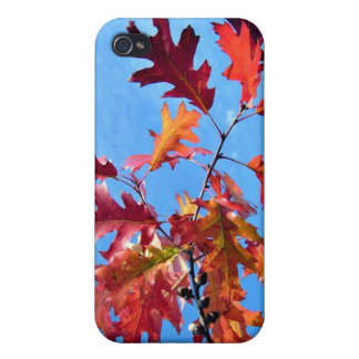 Red maple leaves against blue sky iPhone 4 case