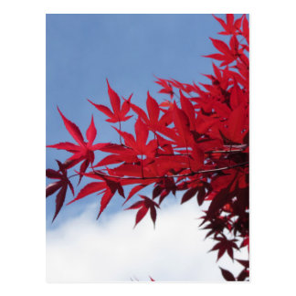 Red maple leaves against the blue sky postcard