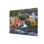 Red maple leaves carpet the rocks in the canvas print