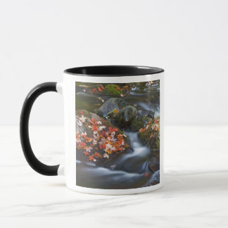 Red maple leaves carpet the rocks in the mug