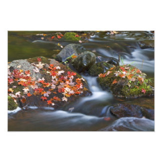 Red maple leaves carpet the rocks in the photo print