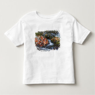 Red maple leaves carpet the rocks in the toddler t-shirt