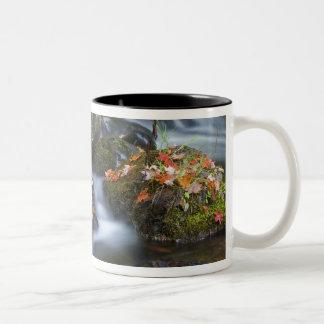 Red maple leaves carpet the rocks in the Two-Tone coffee mug