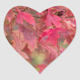 Red Maple Leaves Heart Sticker