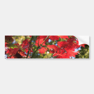 Red Maple Leaves in the Fall Bumper Sticker