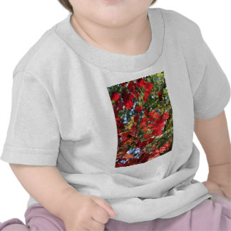 Red Maple Leaves in the Fall T Shirts