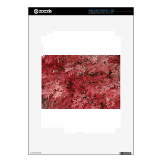 red maple leaves iPad 2 decal