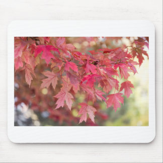 Red Maple Leaves Mouse Pad