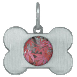 red maple leaves pet ID tag