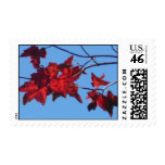 Red Maple Leaves Postage Stamp