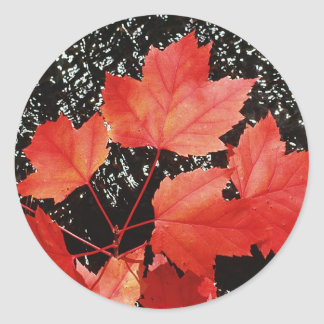 Red Maple Leaves Round Sticker