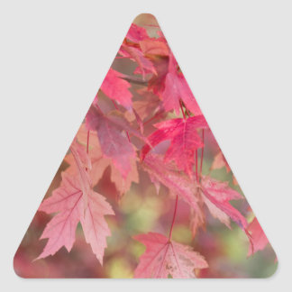 Red Maple Leaves Triangle Sticker