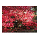 red maple post card