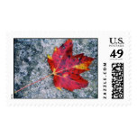 Red Maple Postage Stamp