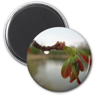 Red Maple Seed Pods at Dawn 2 Inch Round Magnet