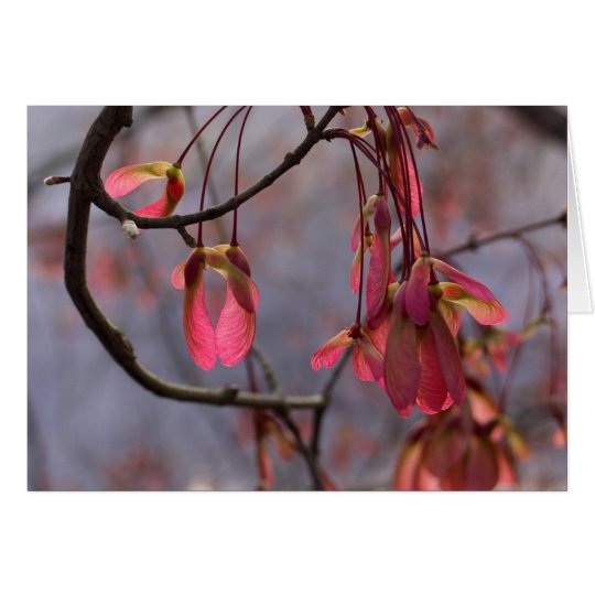 Red Maple Seeds Card